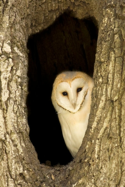 Greeting card with barn owl photo