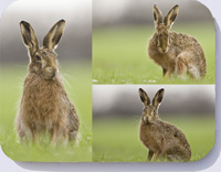 Hare placemats with four hare photos on one placemat