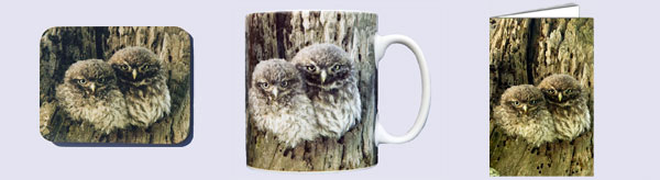Owl mug, coaster and card set